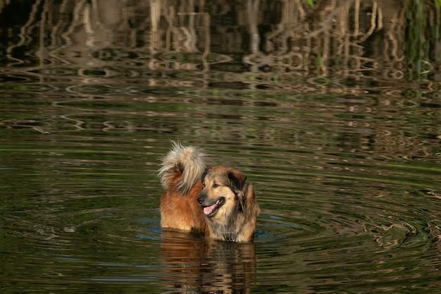 Pies w rzece