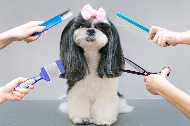 Pies w salonie fryzjerskim; strzyżenie, grzebień, suszarka do włosów. zwierzę dostaje zabiegi kosmetyczne w salonie urody dla psów. szare tło