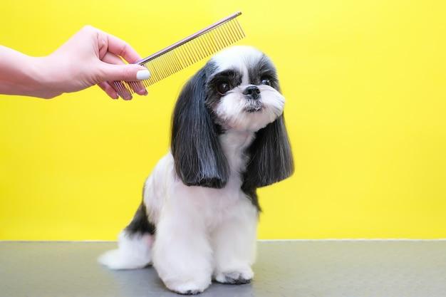 Pies w salonie fryzjerskim; strzyżenie, grzebień. zwierzę dostaje zabiegi kosmetyczne w salonie urody dla psów. żółte tło
