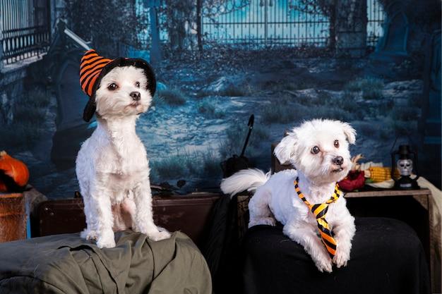 Pies w scenerii nocy halloween ze szkieletem