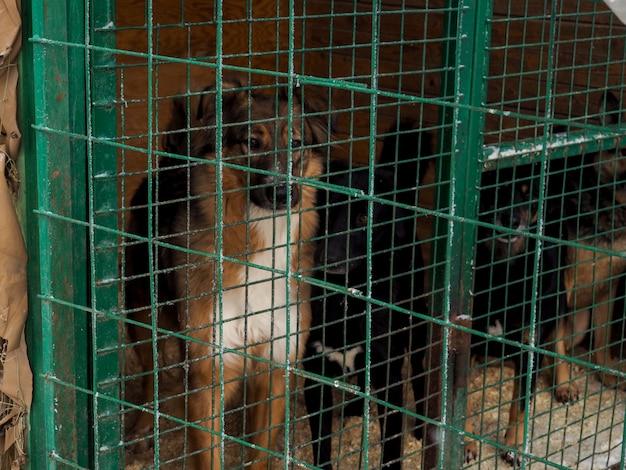 Pies w schronisku dla zwierząt, bezdomny pies w klatce