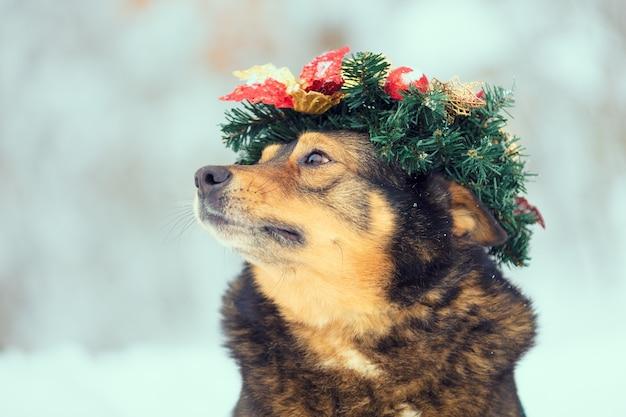Pies w świątecznym wieńcu