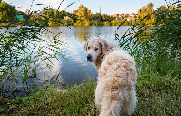 Pies w zimowym lesie