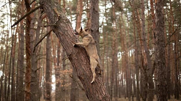 Pies wspiął się na drzewo po patyk.