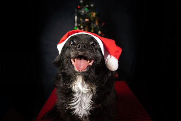 Pies z czapką świętego mikołaja i choinką, na czerwonej powierzchni.