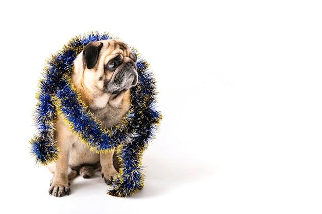 Pies z kopią świątecznych ozdób na szyi