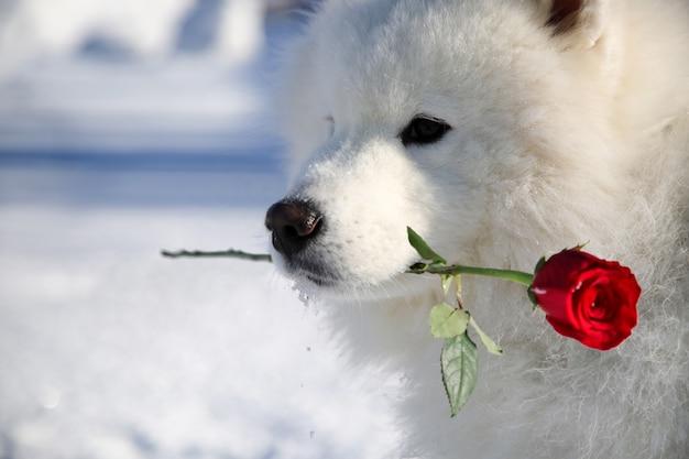 Pies z kwiatem w ustach