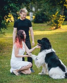 Pies z nowej funlandii bawi się mężczyzną i kobietą
