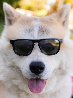 Pies z okularami przeciwsłonecznymi, koncepcja lato