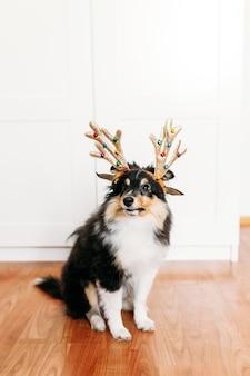 Pies z rogami jelenia na nowy rok i boże narodzenie, dekoracja domu na wakacje, szczeniak