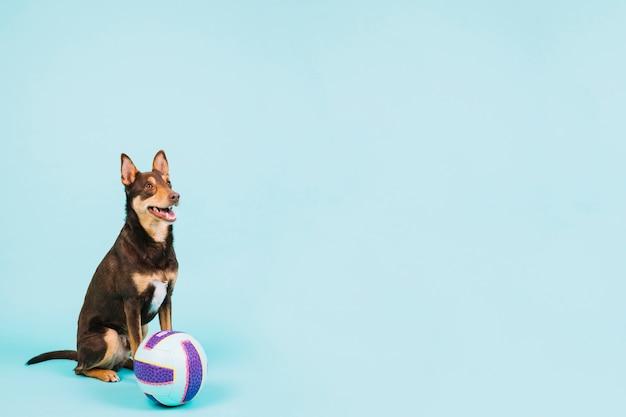 Pies z siatkówką i copyspace