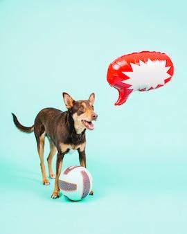 Pies z siatkówki i dymek balon