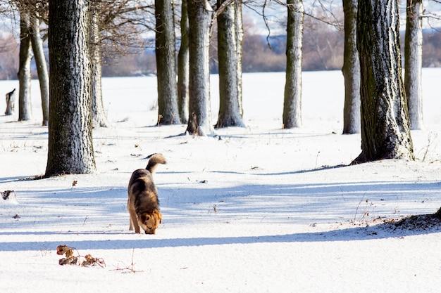 Pies zimą w lesie wśród ośnieżonych drzew