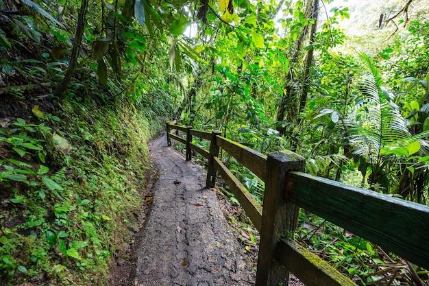 Piesze wędrówki po zielonej tropikalnej dżungli, kostaryce, ameryce środkowej