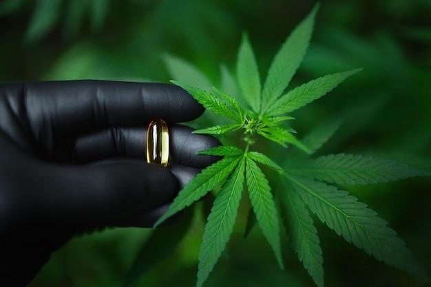 Pigułka cannabis cbd w ręku z czarną rękawiczką, przezroczystym kanabidiolem i zieloną kapsułką z liści konopi, kapsułka oleju z konopi cbd