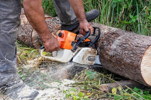 Pilarka w ruchu. twarde drewno pracujące w lesie.
