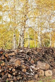 Pile kłody drzewa w lesie. stosy ściętego drewna. kłody, wycinanie drewna, niszczenie przemysłowe. nielegalne znikanie lasów. pojęcie środowiska, nielegalne wylesianie.