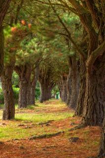 Pine trail hdr