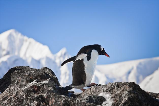Pingwin w śnieżny krajobraz