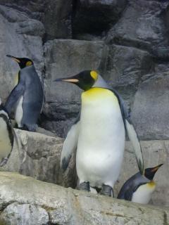 Pingwin zoo śnieg