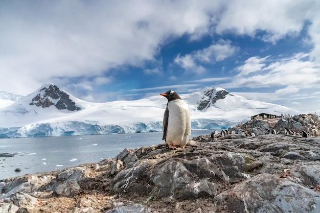 Pingwiny na antarktydzie. port lockroy. wyprawa