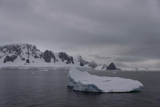 Pingwiny na górze lodowej w morzu