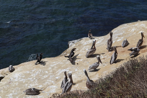 Pingwiny na klifie na wybrzeżu