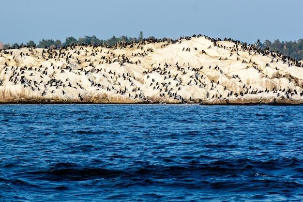 Pingwiny na skalistym wzgórzu nad brzegiem morza