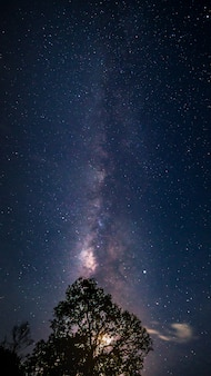 Pionowa droga mleczna na gwiaździstym nocnym niebie z księżycem za sylwetką dużego drzewa