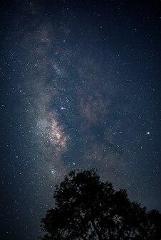 Pionowa droga mleczna na rozgwieżdżonym nocnym niebie z księżycem za sylwetką wielkiego drzewa