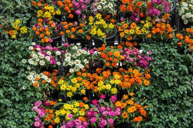 Pionowa ogrodowa zielona roślina i kwiat ściana