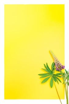 Pionowa pusta żółta kartka z notatką na tekst z wystrojem z kwiatu łubinu w kolorze niebieskim liliowym w pełnym rozkwicie na białym tle
