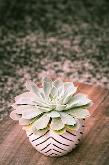 Pionowa roślina kwitnąca echeveria w ozdobnej doniczce
