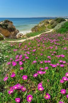 Pionowa wiosna krajobraz plaża gale. albufeira portugalia.