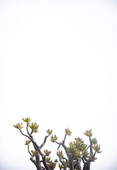 Pionowe izolowane gałęzie drzewa na białym