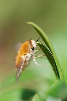 Pionowe, płytkie ujęcie małej, rozmytej muchy pszczoły bombyliidae wiszącej na liściu