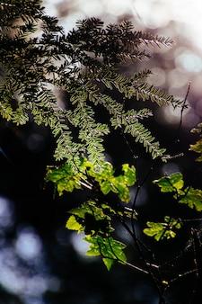 Pionowe selektywne focus strzał z gałęzi różnych drzew