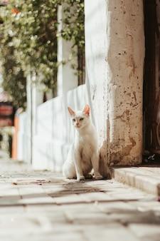 Pionowe selektywne ujęcie białego kota siedzącego na zewnątrz