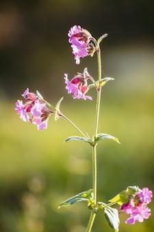 Pionowe selektywne ujęcie ostrości kwitnących różowych kwiatów w zieleni