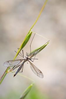 Pionowe strzał zbliżenie muchówki muchowe na zielonym liściu łodygi