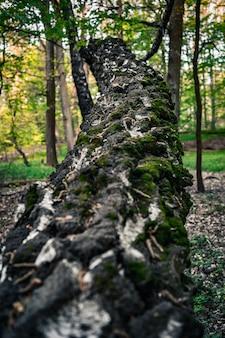 Pionowe strzał zbliżenie omszałego pnia zwalonego drzewa