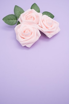 Pionowe strzał zbliżenie różowych róż na białym tle na fioletowym tle z miejsca na kopię
