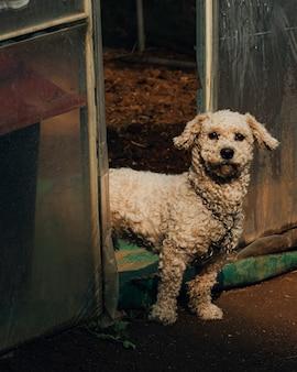Pionowe ujęcie białego psa w korei południowej, stojącego przy wejściu do szklarni