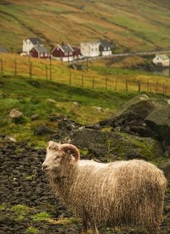 Pionowe ujęcie białej owcy na pastwisku w ciągu dnia