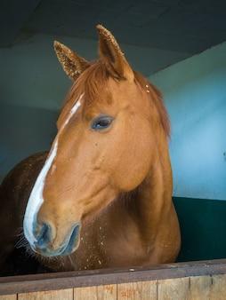 Pionowe ujęcie brązowego konia w stodole