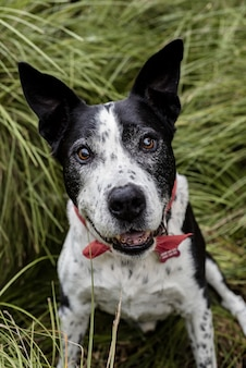 Pionowe ujęcie cute teddy roosevelt terrier pies siedzi na trawie
