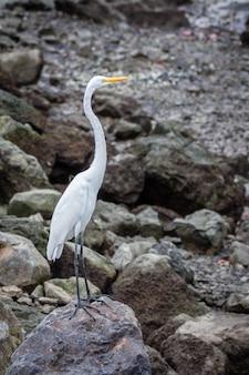 Pionowe ujęcie czapla biała stojąca na skale nad brzegiem morza