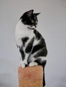 Pionowe ujęcie czarno-białego kota stojącego na wieży kotów