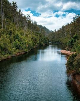 Pionowe ujęcie długiej rzeki z drzewami na brzegach