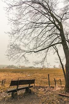 Pionowe ujęcie drewnianej ławki w parku leśnym z ponurym niebem w tle